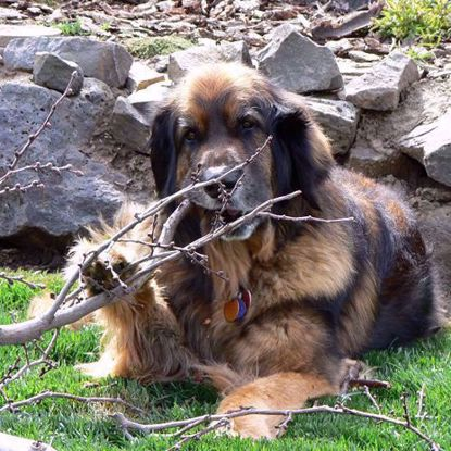 Leonberger 3 Test Combo