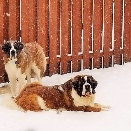 Picture for category Saint Bernard Genetic Testing